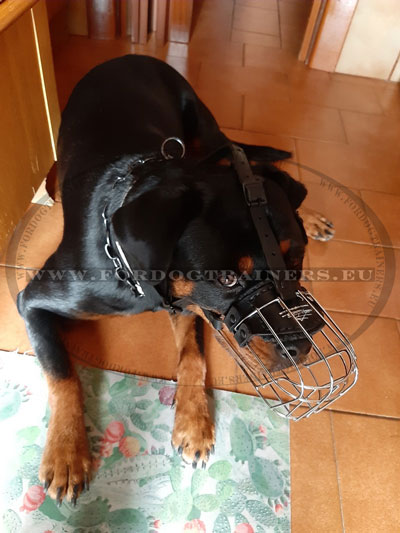 Muzzle for Rottweiler Wire Basket Padded