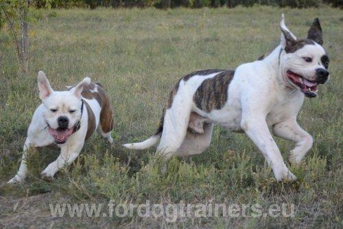 Mon chien court après les chats... que faire ? : Dog
