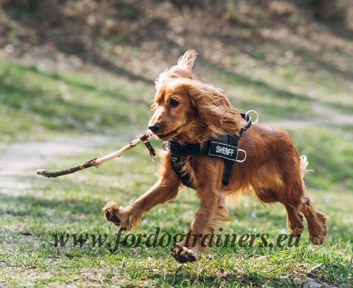 Spaniel Nylon Harness for Effective Training and Running