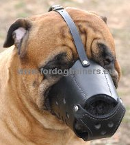 Bullmastiff Everyday Leather Dog Muzzle Comfortable