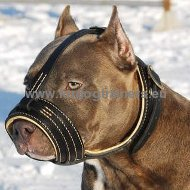 Leather Pitbull Muzzle