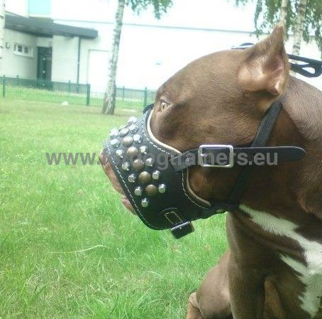Original soft muzzle for Pitbull