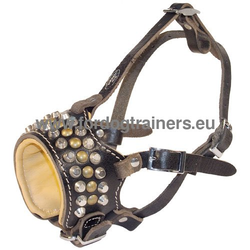Leather dog muzzle with magnificent decoration for Pitbull