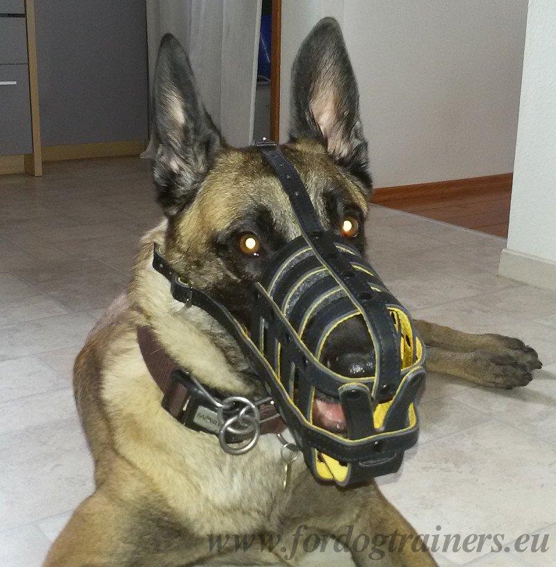 Museliere legere pour chien   Museliere confort en cuir