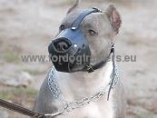Pitbull Everyday Leather Dog Muzzle ☢