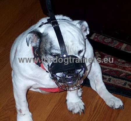 Functional Leather Muzzle Best Steel Wire for Pitbull