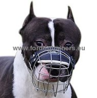 Pitbull Muzzle for Walking and Training
