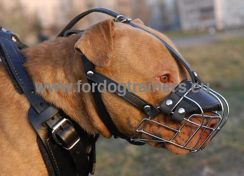 Well Circulated Muzzle for Pitbull