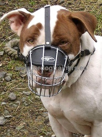 Amstaff Muzzle for Training