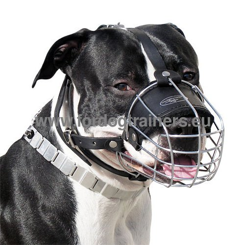 Wire Muzzle for Amstaff Absolutely Reliable