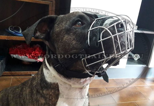 Good Muzzle for Pitbull Walking and Training