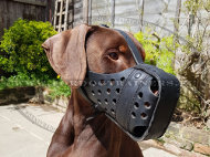 Handcrafted Leather Agitation Muzzle for Doberman