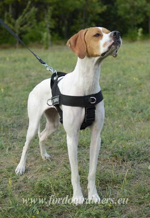 Step-in Nylon Harness for Dog Training