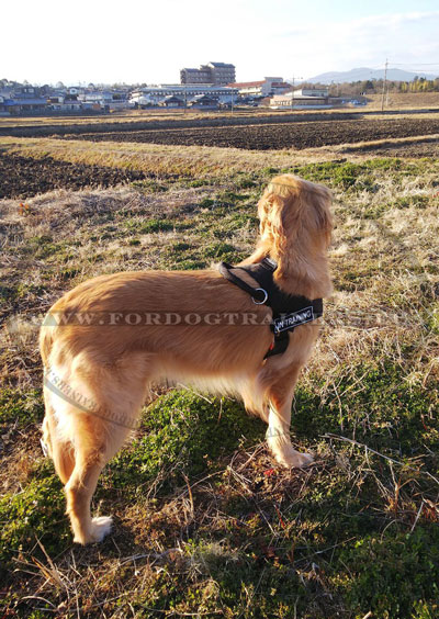 Gun Dog Nylon Harness