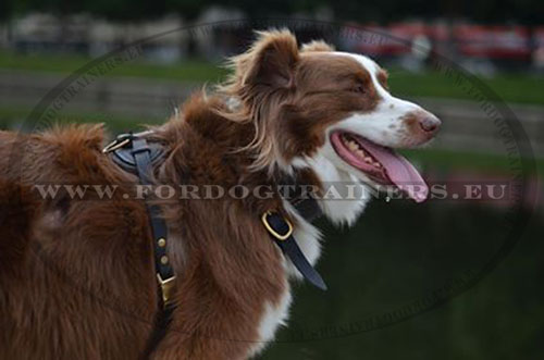 Leather Harness for Dog Training and Tracking