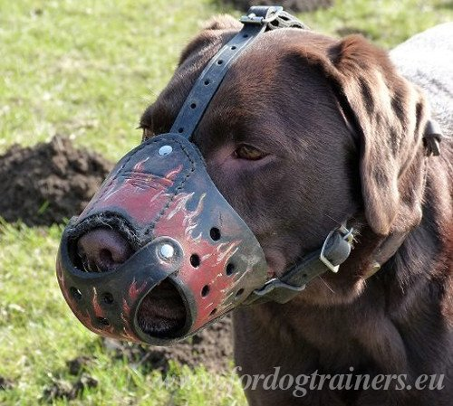 Dog Muzzle with Handmade Painting