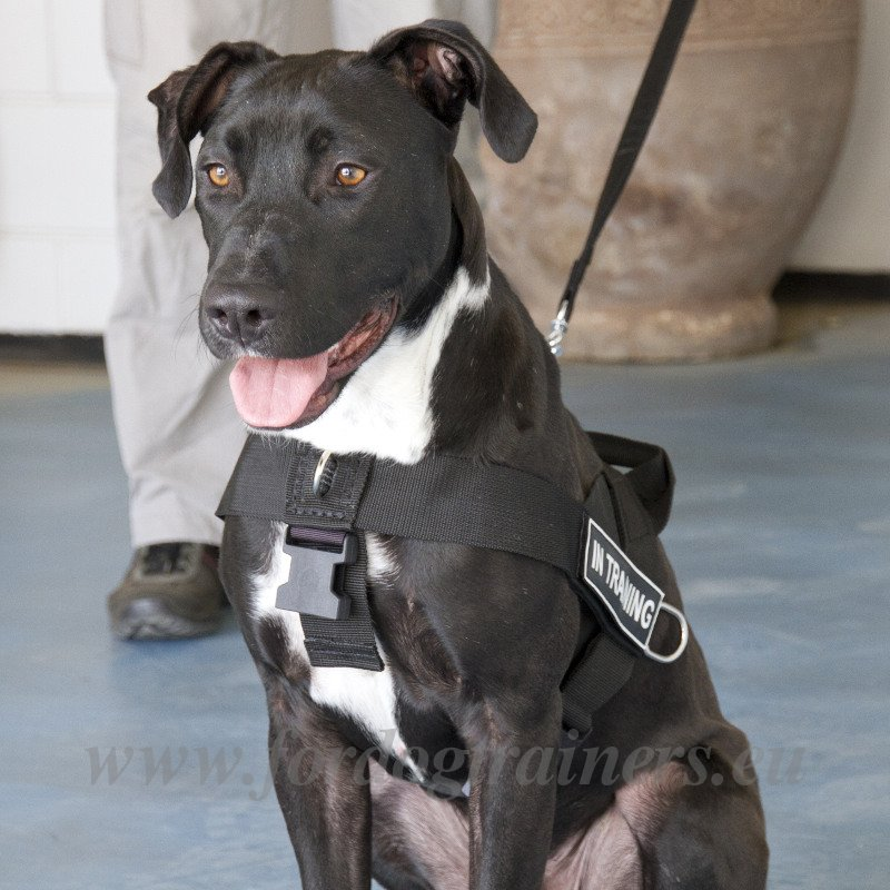 Dog Harness With A Handle For Pitbull 54 1