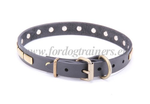 Collars with Brass Plates for Big Dogs