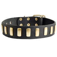 Cane Corso Gorgeous Wide Collar With Brass Plates