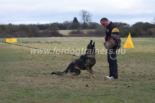 Professional Attack Training Shepherd Barks