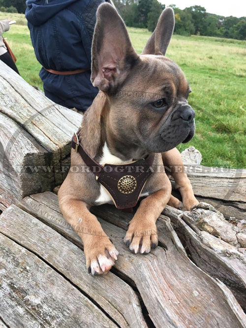 Harness Size for French Bulldog Leather