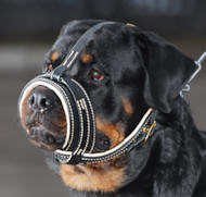 Royal Nappa Leather Dog Muzzle for Rottweiler