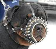Leather Dog Muzzle for Rottweiler with SPIKES, Royal