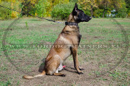 Leather Collar Designer Decorations for Large Malinois