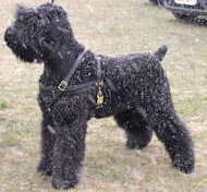 Russian Terrier Tracking /Pulling/Walking Leather Dog Harness H5
