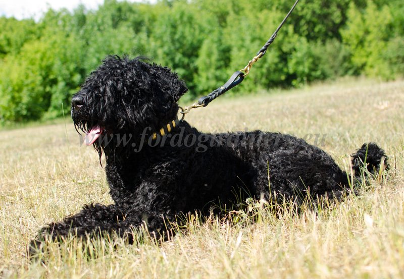 Russian Terrier Leather Dog Lead
