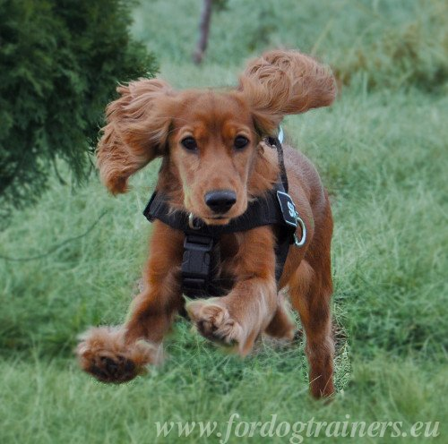 Practicable Harness for Cocker Spaniel