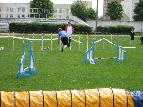 Dog Agility General Information