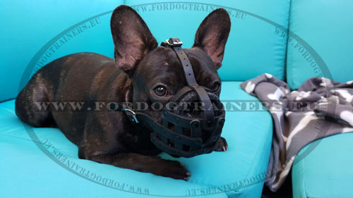 Leather Muzzle for French Bulldog Basket Type