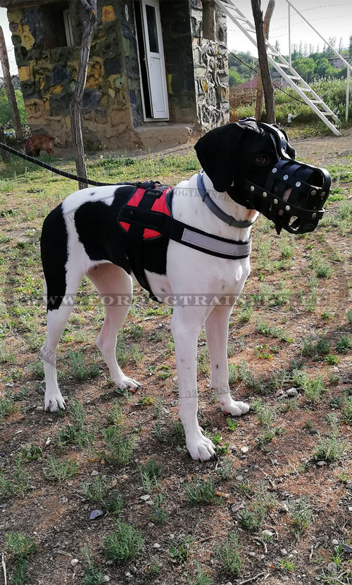Great Dane Muzzle with Padding