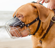 Wire Dog Muzzle for Dogue de Bordeaux