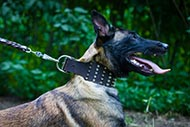 Extra Wide Leather Collar for Malinois