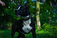 Amstaff Spiked Collar Brass&Leather