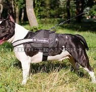 Harness Multifunctional of Nylon for Amstaff ⚑