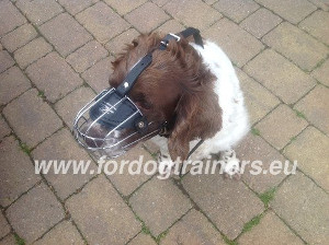 Wire Basket Muzzle for English Springer