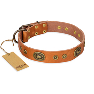 "Leather Dog Collar with Studs ""Dandy Pet"" FDT Artisan"