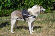 Nylon Harness with Patches for Laika Super Training