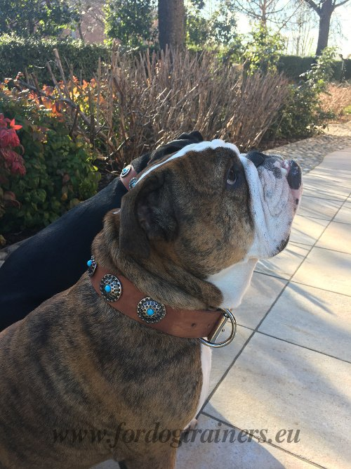 Bulldog Decorated Collar Tan Leather