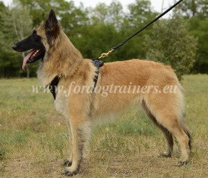 Dog Training Products for Belgian Tervuren