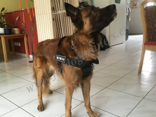 Strong Dog Harness with Patches