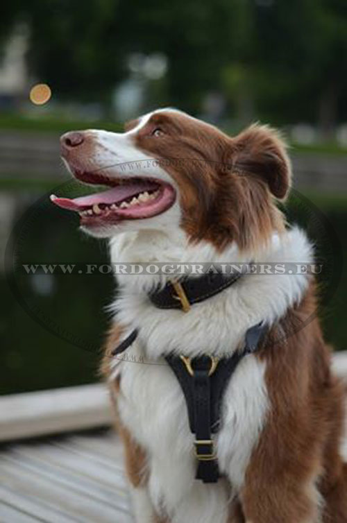 Leather Dog Harness Exclusive for Dog Training