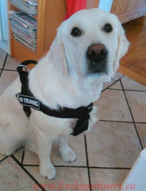 Easy Walk Dog Harness for Labrador