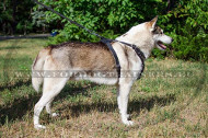Harness for Stylish Hunting Dog Studded ➽