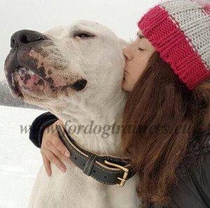 Equipement pour grands chiens