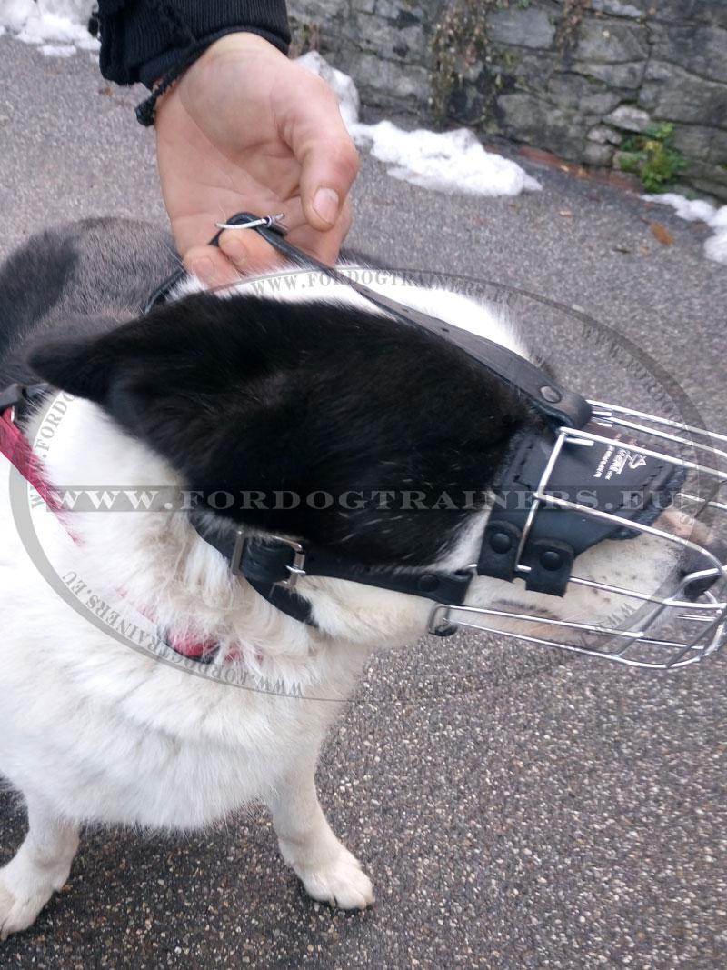Wire Muzzle for Alaskan Malamute, Husky ⚶ [M4###1057 Museruola per ...