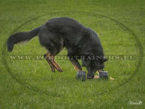 Dog Training Dumbbell for GSD
